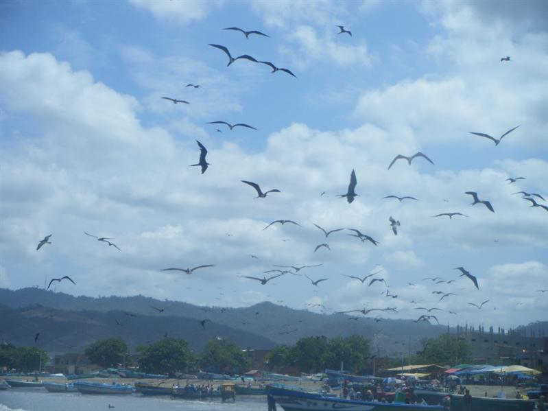 birds above the fishing market