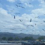 birds above the fishing market