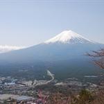 積雪的富士山在配上櫻花