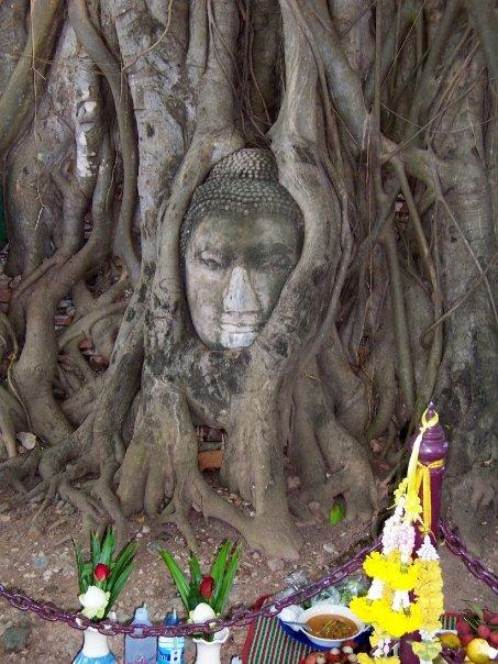 BUDDHA IN THE BODHI TREE, AYUTHAYA HISTORICAL PARK, THAILAND