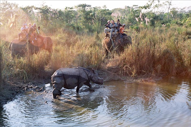 Rhino, Chitwan