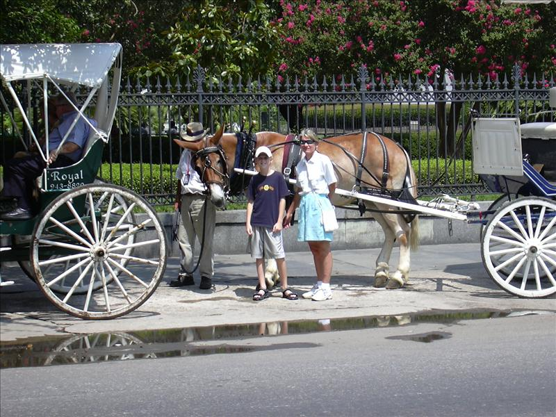 horse drawn carriage for hire