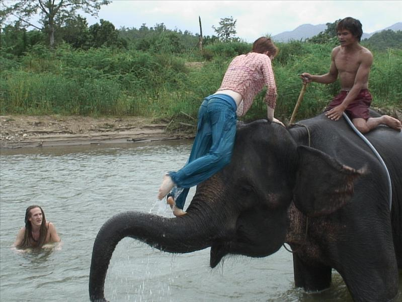 """Swimming  with Elephants"""