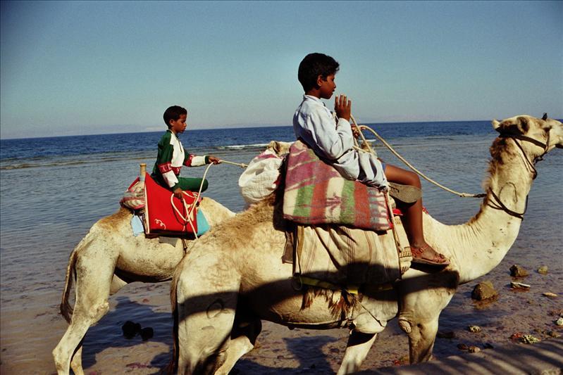 kids & camels