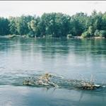 20額爾齊斯河1.jpg