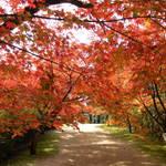 2014秋遊九州--基山九年庵及仁比山神社