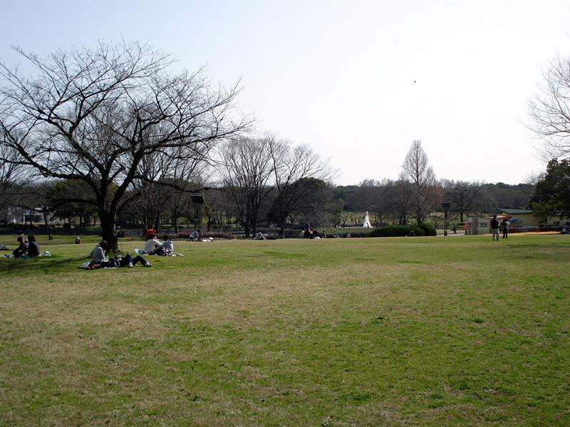 in the park