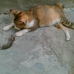 猫猫 (6).jpg