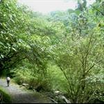 九寮溪步道 (17).JPG