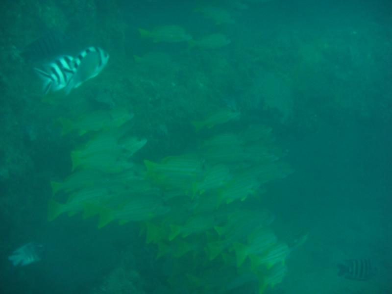 Navy Pier, Ningaloo Reef 2