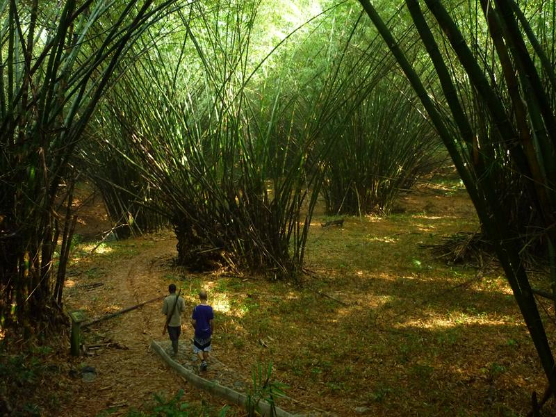 Ankasa-Nini-Suhien Nationalpark: Bamboo Kathedrale