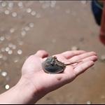 手中的活化石