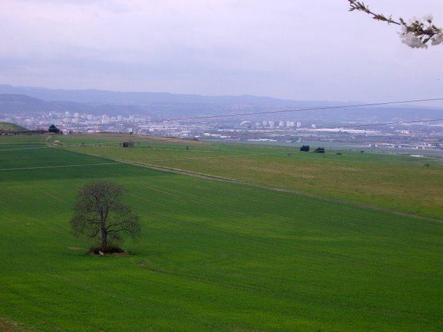 法國的田野似乎都一定要有棵樹