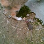 猫猫 (4).jpg