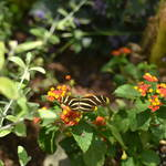 Butterfly Pavillion at the Desert Botanical Garden