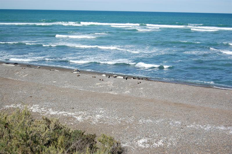 Pingouin's Land