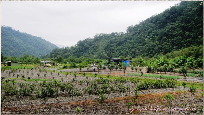 山中的開心農場