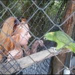 09_ap_birds9.jpg