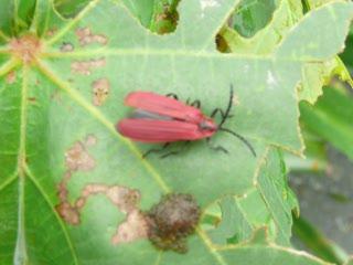 紅飛蟲.MOV