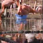 pink chicken...