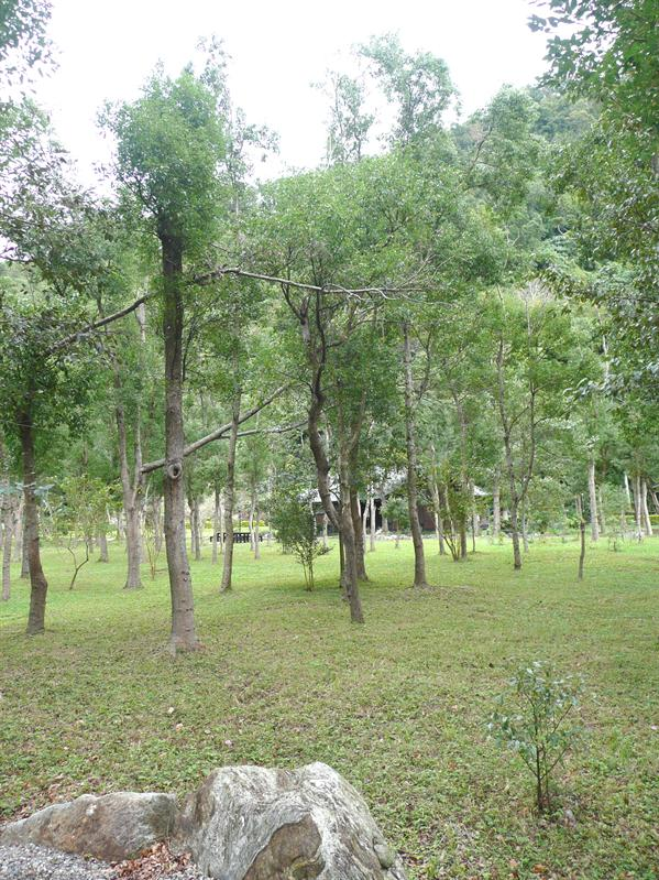 南澳原生樹木園