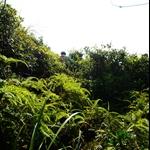一開始便是茂密叢林山腰路
