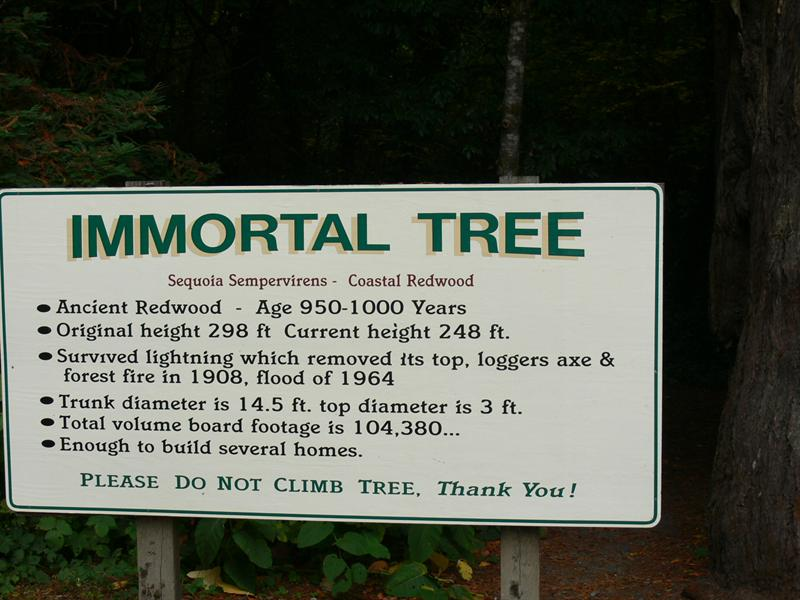 immortal tree still the same 25 years latter