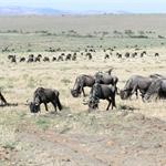 Maasai Mara, Kenya, Dec 2005