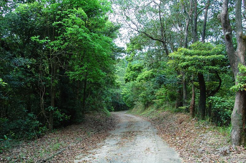 大埔滘林道長瀝尾段 Tai Po Kau Forrest Track Cheung Lek Mei Section