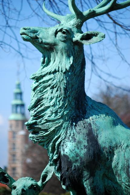 Stag at Rosenborg