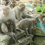 烏山獼猴保護區 (3).JPG