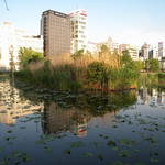 2016昇龍道之旅--順遊上野(上野恩賜公園)