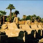 row of Shpinxes at Luxor