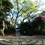 20111204 道風針草  Tao Fong Shan to Needle Hill