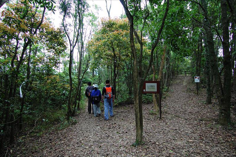 分岔位左路上老虎騎石及右往山火瞭望台