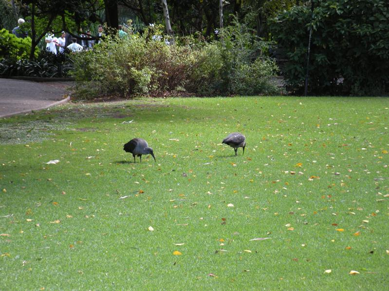 Birds in Company Gardens