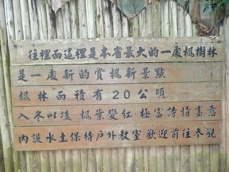 東勢林場楓樹林