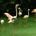 BirdPark-09.jpg