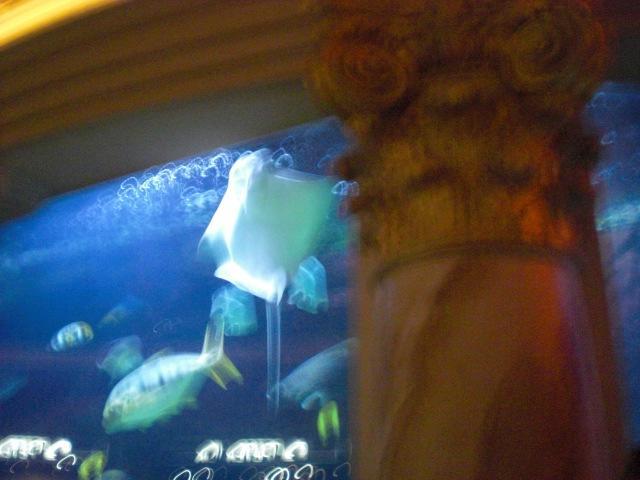 Yet another stingray @ Caesar's aquarium