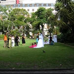 Wedding Photos at Company Gardens