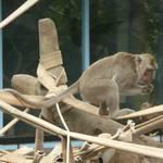 獼猴 (4).JPG