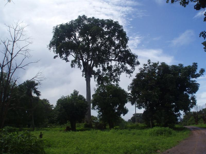 Ediondogou