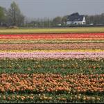 2011-Netherlands Keukenhoff-0006.jpg