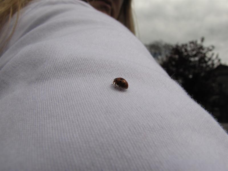 1st ladybug I've seen here