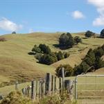 des collines vallonnées