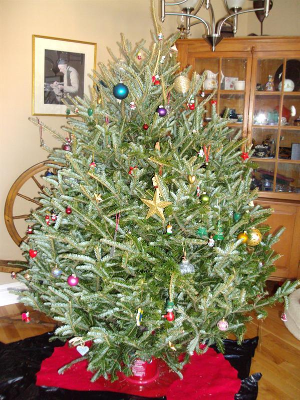 Weihnachtsbaum (als er endlich stand)
