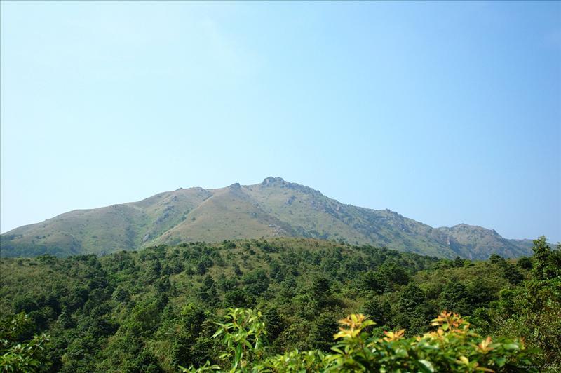 遠望禾秧山