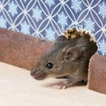 Rodent Control Sacramento CA