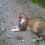 猫猫 (3).jpg