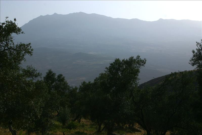 lots of olive groves...